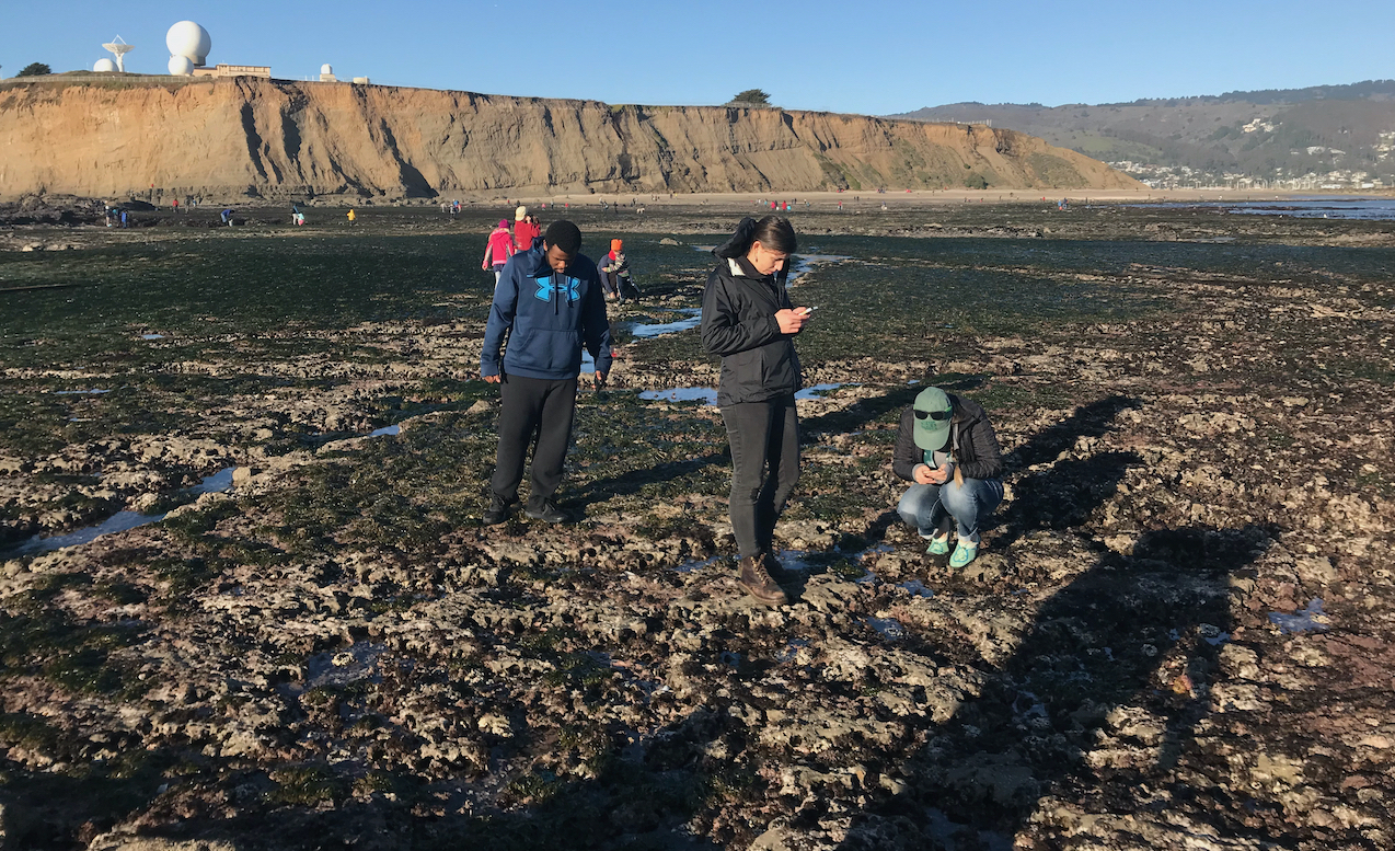 Logging <a href='https://www.inaturalist.org' target='blank'><em>iNaturalist</em></a> observations of intertidal invertebrates with Stanford undergraduates at Pillar Point, California.